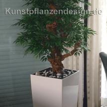 002_ruscus_im_cubico_weiß_glanz_40_40_75cm