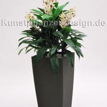 009_orchideenpflanze_im_hochgefaeß