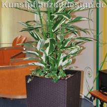 004_marantapflanze_im_hochgefaeß