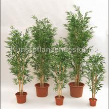 009_bambuspflanzen_in_vielen_groeßen