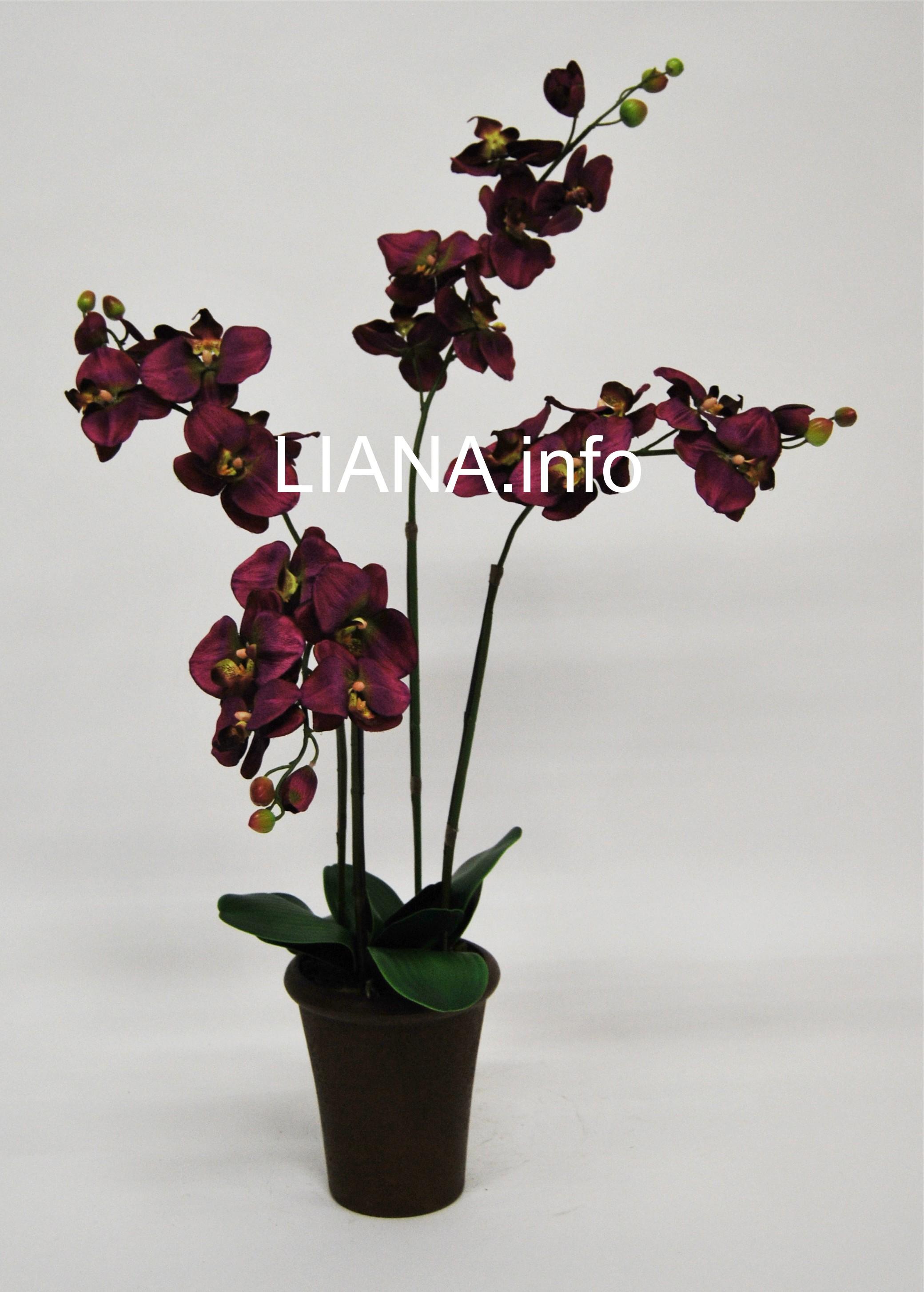 orchideenpflanze im topf liana kunstpflanzen onlineshop. Black Bedroom Furniture Sets. Home Design Ideas