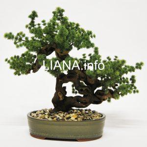 Kunstbonsai/Wurzelholzpflanzen